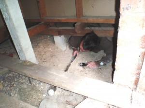 Mr-Inspector-sub-floor-inspection